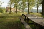 Kastanienwald / chestnut forest